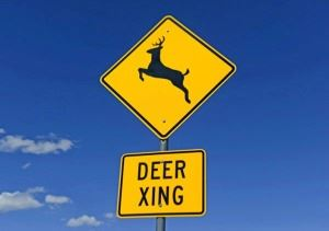 deer graphic