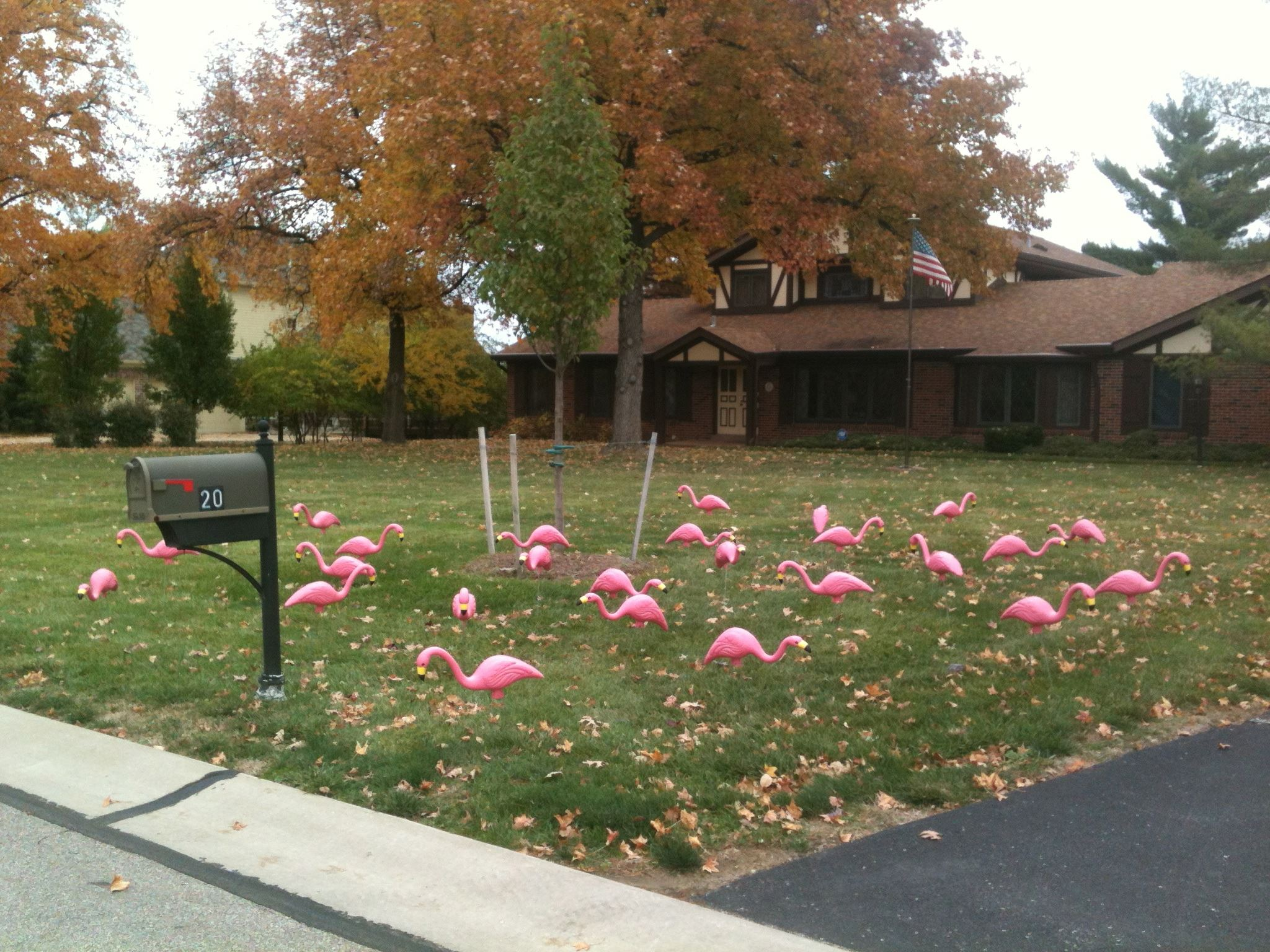 Flock of T and C Flamingos